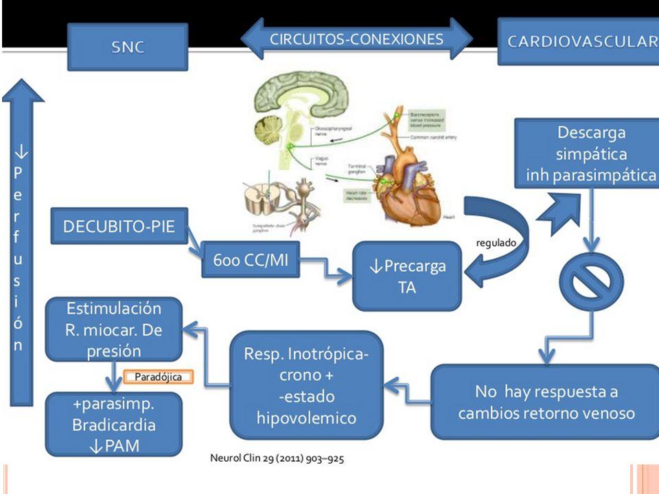O TRAS PRUEBAS Prueba de adenosintrifosfato (test adenosina) Anormal si pausa > 10 seg Últimos estudios: pacientes con síncope, corazón sano, ECG normal que hacen BAV, no PR, no precede de bradicardia y niveles de adenosina altos.