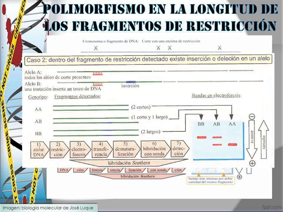 Imagen: biología molecular de José Luque