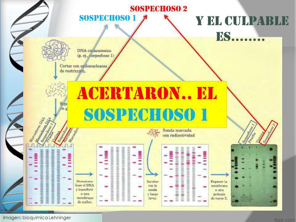 Sospechoso 1 Sospechoso 2 y EL CULPABLE ES…….. ACERTARON.. EL SOSPECHOSO 1 Imagen: bioquímica Lehninger
