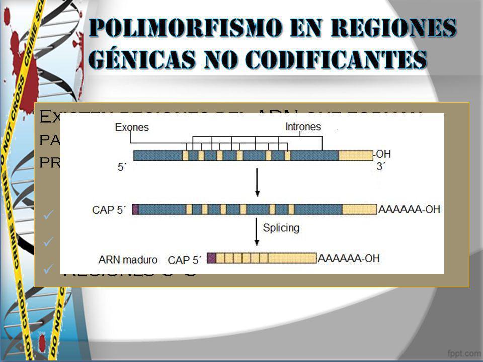 Existen regiones del ADN que forman parte del gen pero no codifican su producto génico. Promotores Intrones Regiones 5 3