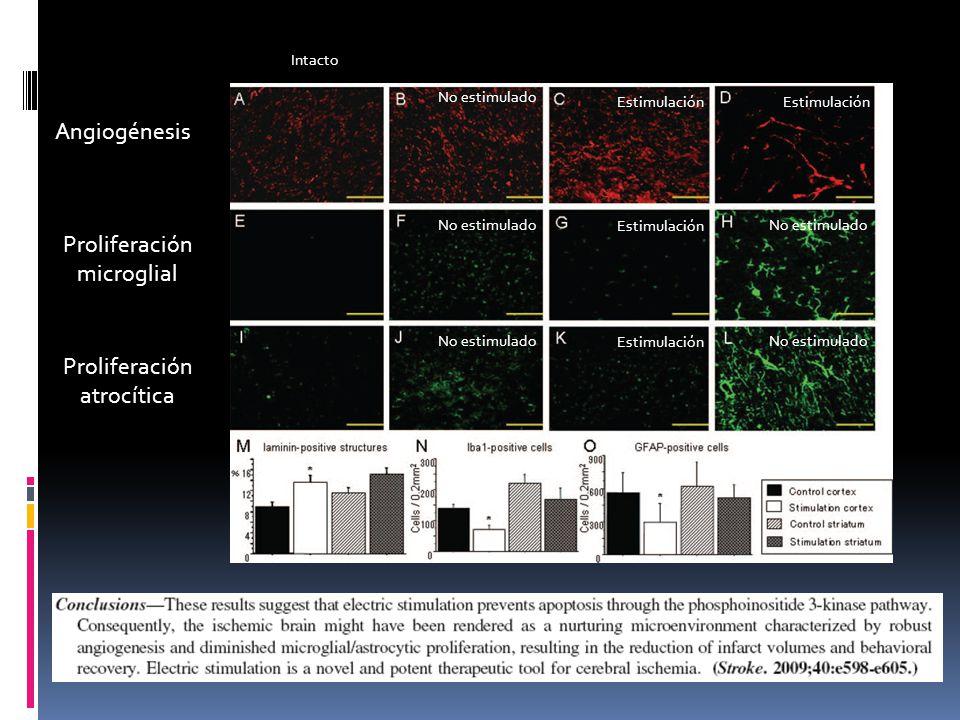 Angiogénesis Proliferación microglial Intacto Proliferación atrocítica No estimulado Estimulación No estimulado Estimulación No estimulado