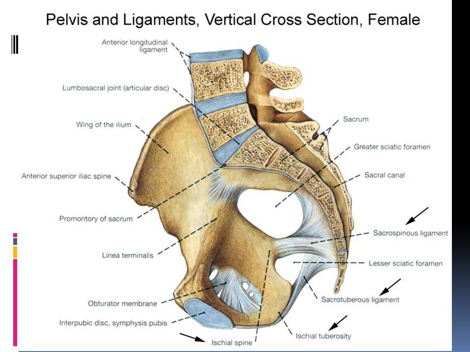 Representa el 2-3% de todas las fracturas Son producto de traumatismos de alta energía