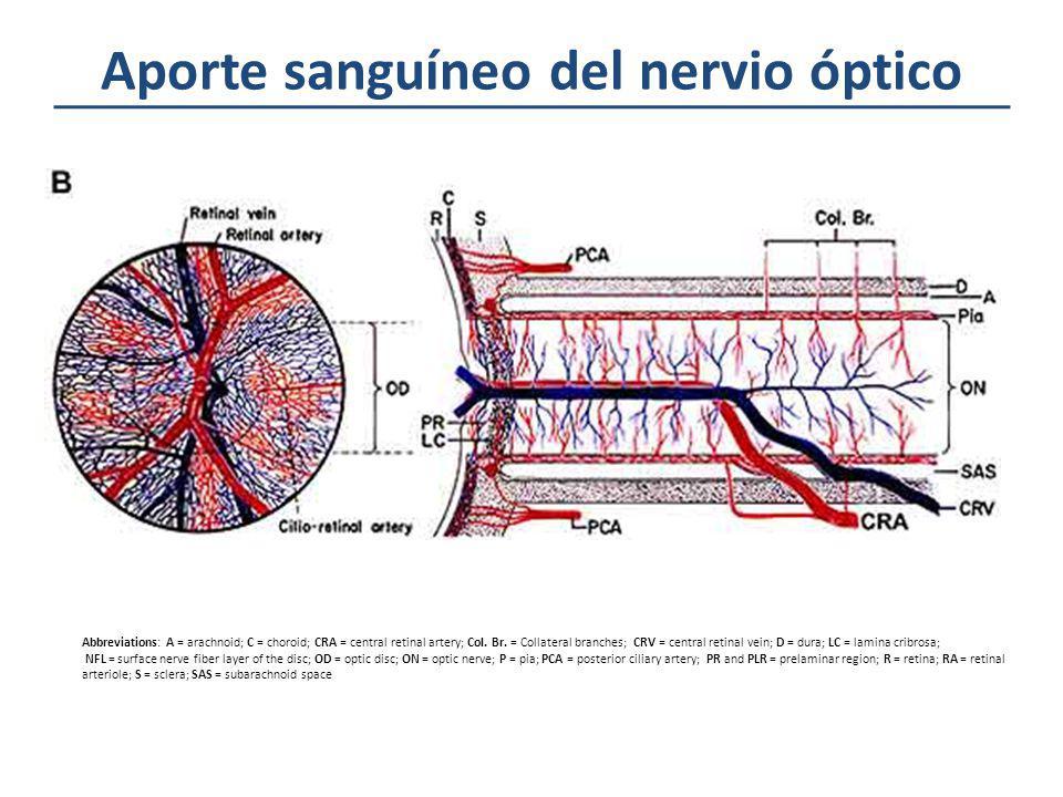 Aporte sanguíneo del nervio óptico Abbreviations: A = arachnoid; C = choroid; CRA = central retinal artery; Col. Br. = Collateral branches; CRV = cent