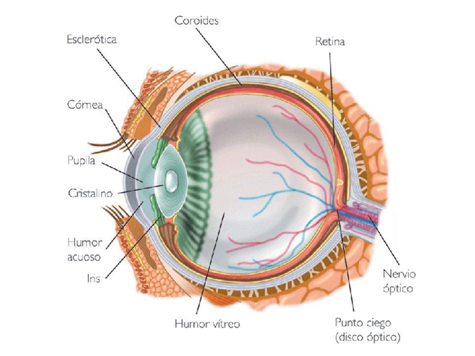 Prevención de Isquemia de la Retina