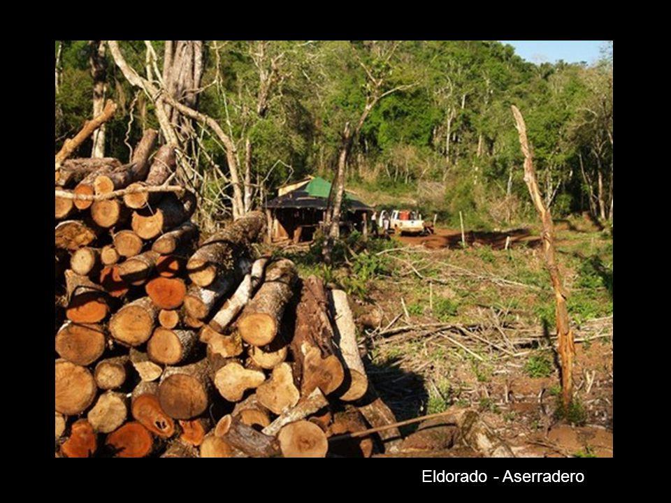 Eldorado- Bosque