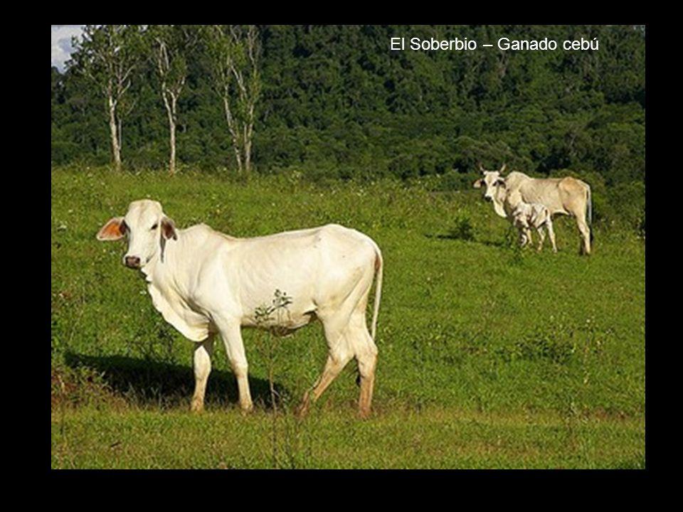 Comunidades guaraníes