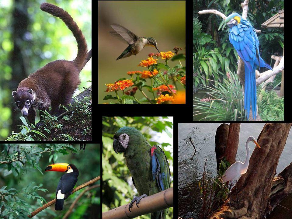Fauna misionera