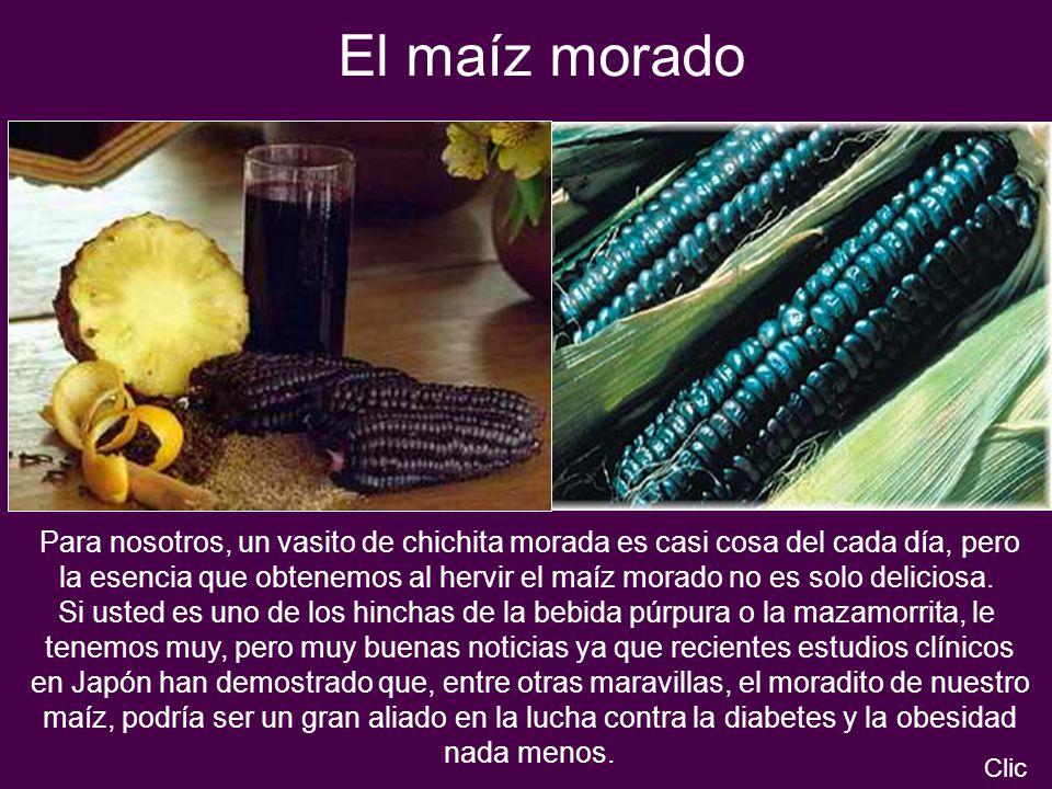 El maíz morado Para nosotros, un vasito de chichita morada es casi cosa del cada día, pero la esencia que obtenemos al hervir el maíz morado no es sol