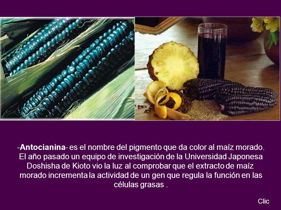 -Antocianina- es el nombre del pigmento que da color al maíz morado. El año pasado un equipo de investigación de la Universidad Japonesa Doshisha de K