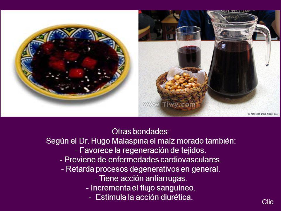 Otras bondades: Según el Dr. Hugo Malaspina el maíz morado también: - Favorece la regeneración de tejidos. - Previene de enfermedades cardiovasculares
