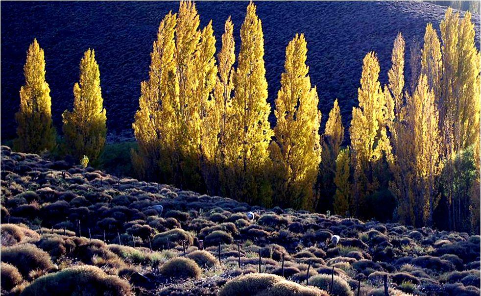 ALUMINE es una población ubicada a orillas del rio de su nombre, en zona de altas montañas y próxima al