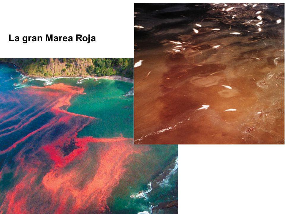 La gran Marea Roja