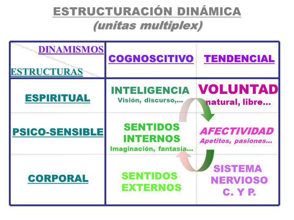 INNATOS: - HERENCIA ( Y TRANSMISIÓN AMBIENTAL-FAMILIAR) - CONSTITUCIÓN ANATÓMICA (DISCAPACIDADES …) - TEMPERAMENTO ( S.N.C./C.Intelectual – ENDÓCRINO - METABÓLICO-) educableADQUIRIDO // educable : ( papel de la inteligencia y la voluntad) - CARÁCTER logradaCONQUISTADA // lograda : ( papel de la conciencia y la libertad) - LA PERSONALIDAD persona 1.