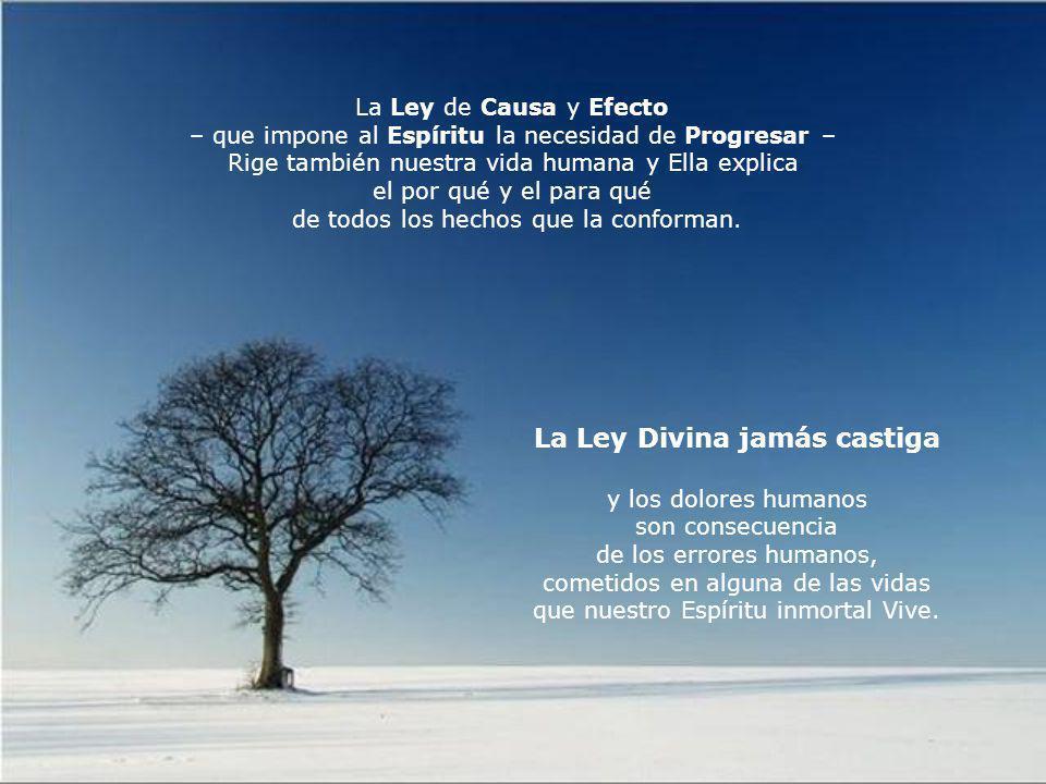 Causa y efecto Desde el amor y al servicio del Amor, ¡ Refleja.