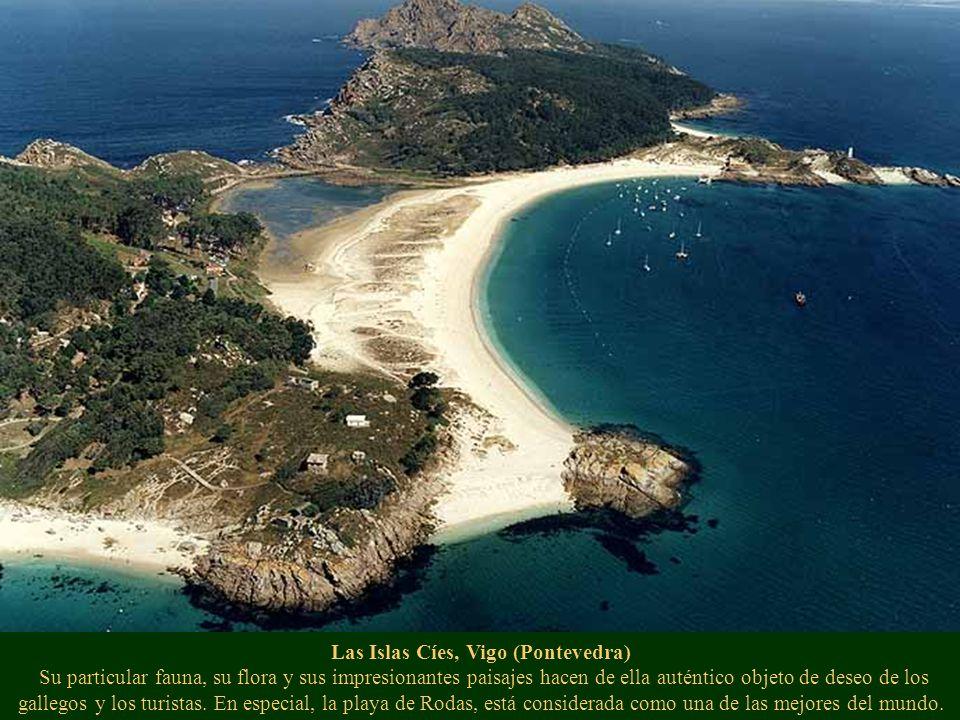 Fragas del Eume, Pontedeume (La Coruña) Parque natural desde 1997. Anfibios, aves, especies vegetales, líquenes, musgos y otras especies únicas del lu