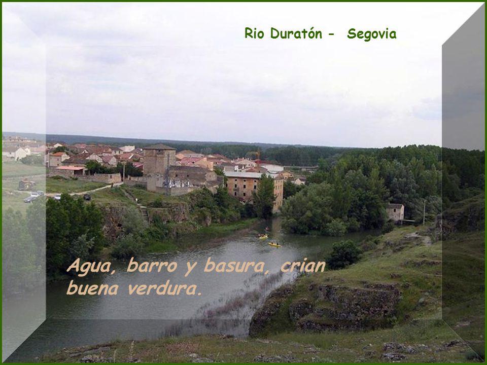 Parque de Monfragüe Ranas que cantan, el agua cerca; si no del cielo, si de la tierra.