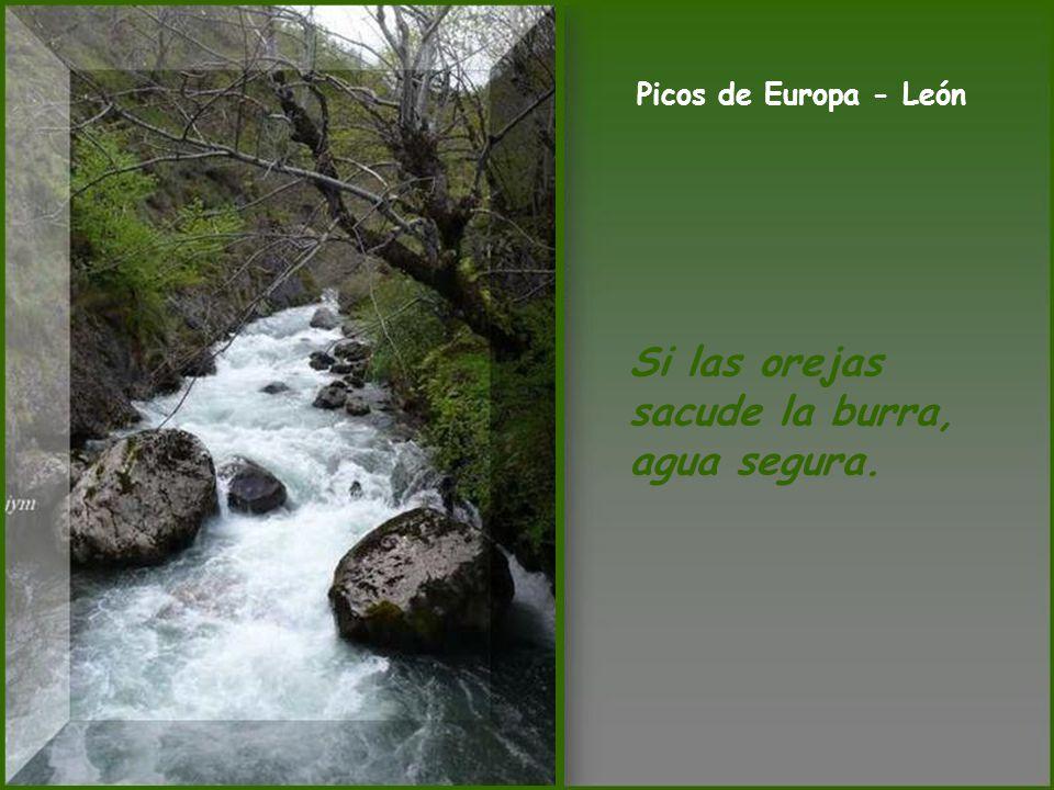 Laguna - Benavides de Orbigo (León) Del agua mansa líbrenos Dios, que de la removida me libro yo.