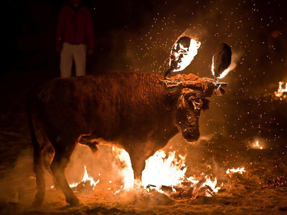 Toros torturados, alanceados, ensogados, embolados, perseguidos, acosados, acribillados, humillados, mutilados..
