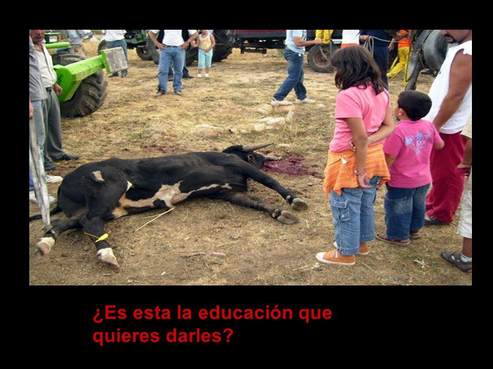 …no sólo para los toros sino para sí mismo o para sus hijos…
