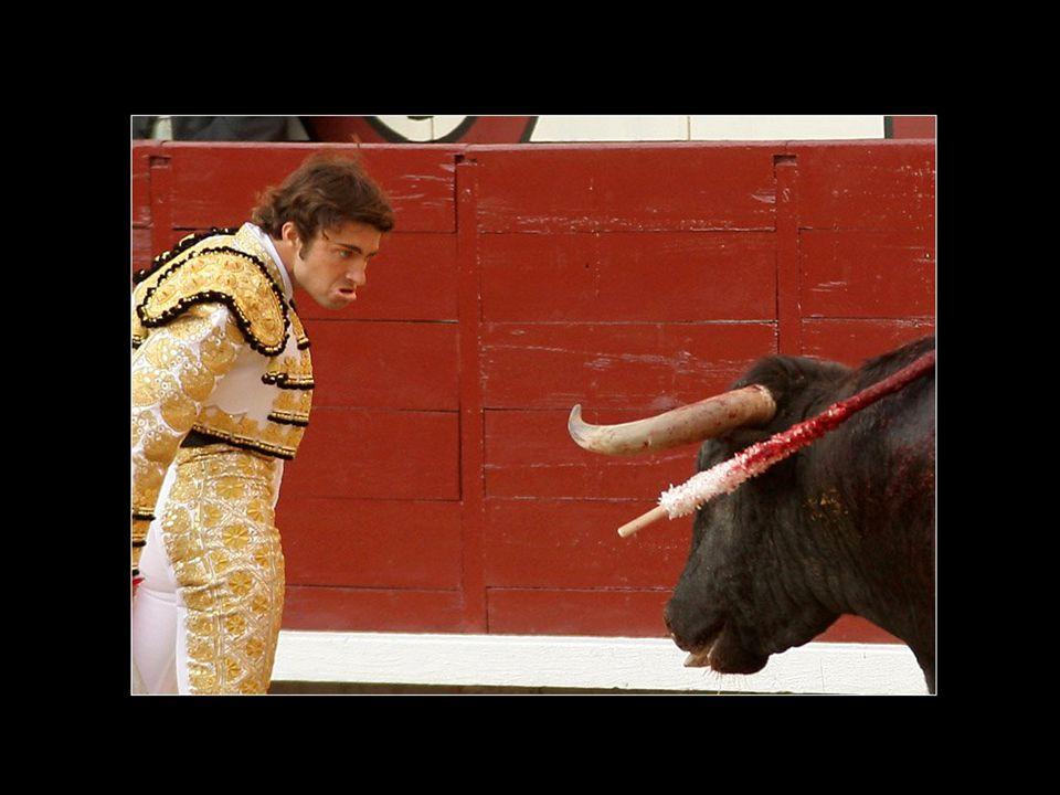 PORQUE LOS TOREROS NO SON VALIENTES, NI MAESTROS… En una corrida, el toro no tiene ninguna posibilidad de salvar su vida.