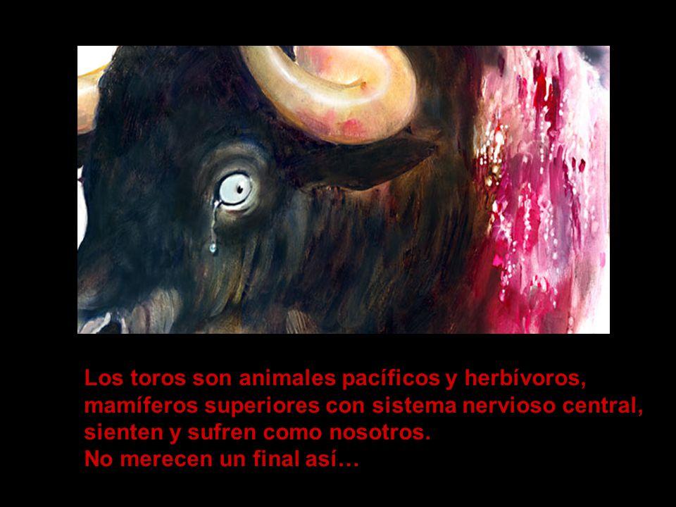 …porque maltratar a un animal y torturarlo hasta la muerte es cruel, ofensivo para la mente y el espíritu, promueve la agresividad y la falta de respeto por la naturaleza