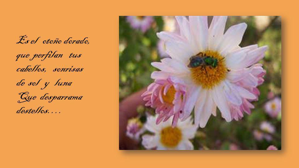 Es aroma en primavera, que glorifica el te quiero, y motiva la pasión, que nos Conduce al sendero..