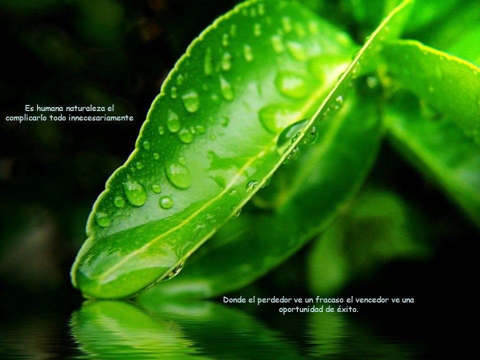 En la vida, usa el estiércol que te arrojen para cultivar un hermoso jardín. Cada instante es una semilla de la que germinará el fruto de tus decision