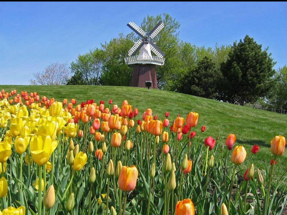 Ahora te ofrezco unas vistas del Parque Keukenhof (en Neerlandés Jardín de la Cocina) con más de 32 Hª cerca de Lisse, conocido como el Jardín de Euro