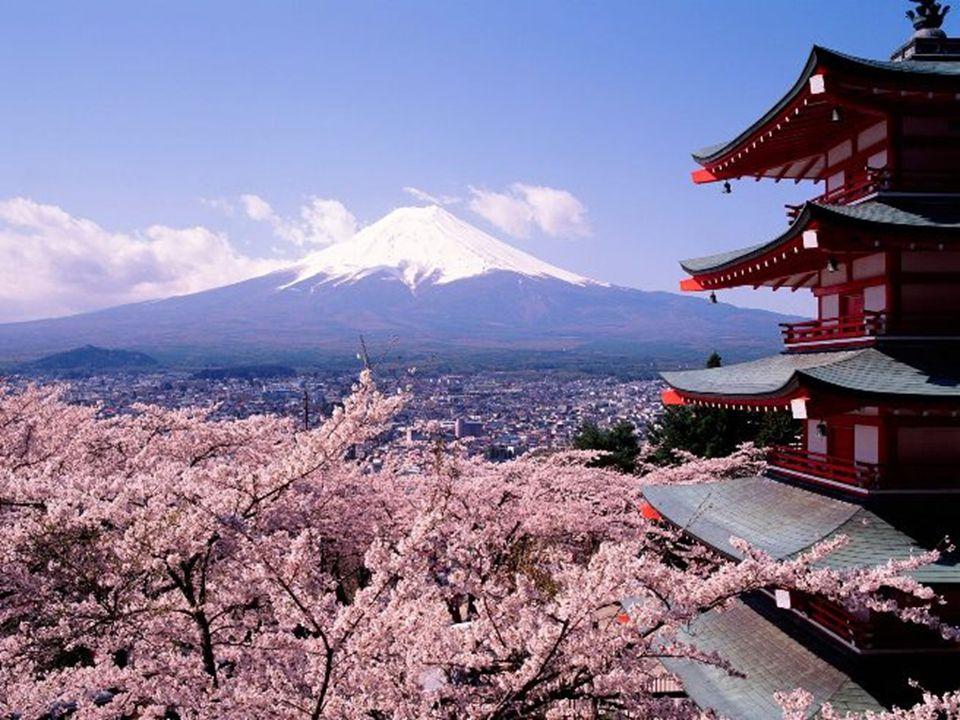 De hecho, en la sociedad japonesa los Sakura representan lo efímero de la vida humana ya que las flores desaparecen completamente en solo una o dos se
