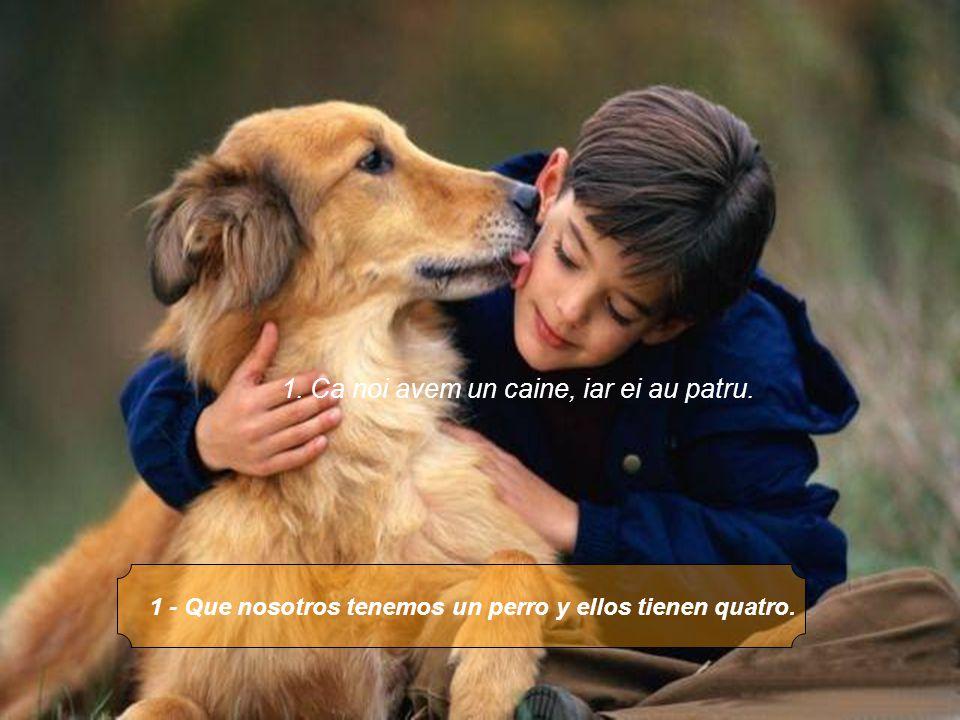 1 - Que nosotros tenemos un perro y ellos tienen quatro. 1. Ca noi avem un caine, iar ei au patru.