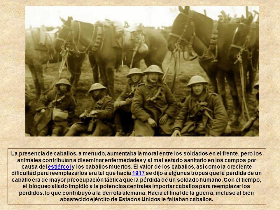 Los militares utilizaron caballos principalmente para apoyo logístico durante la guerra; eran mejores que los vehículos mecanizados en el viaje a trav