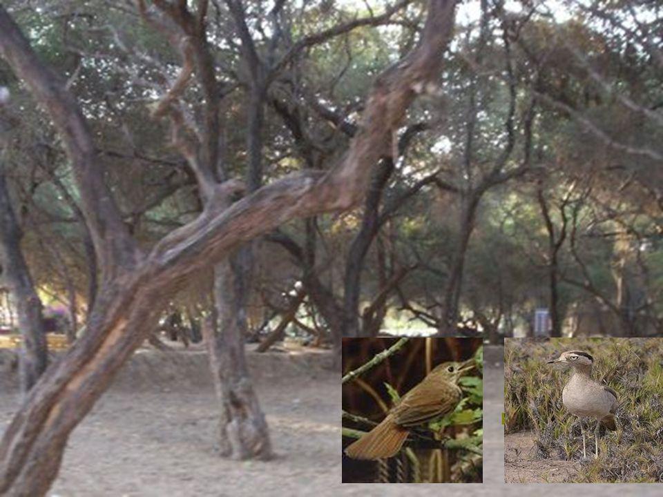 Reservorio Tinajones se encuentra el Distrito de Chongoyape a 46 Km. al sudeste de Chiclayo