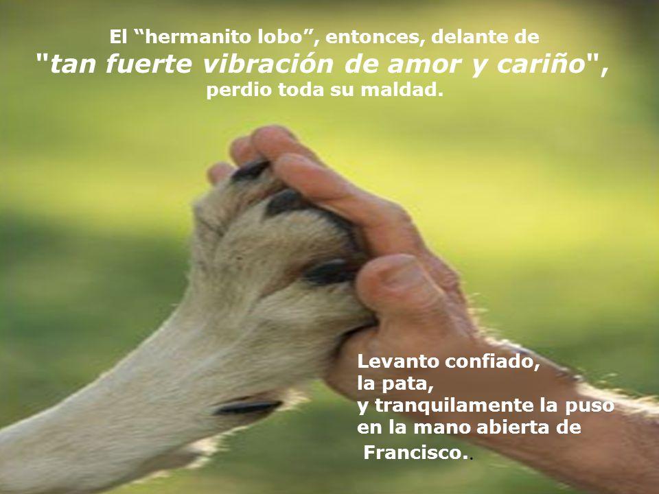 Francisco entonces le dijo: Hermanito Lobo, quiero solamente conversar con vos, mi hermano... Y si me estas entendiendo, por favor, dame tu patita!