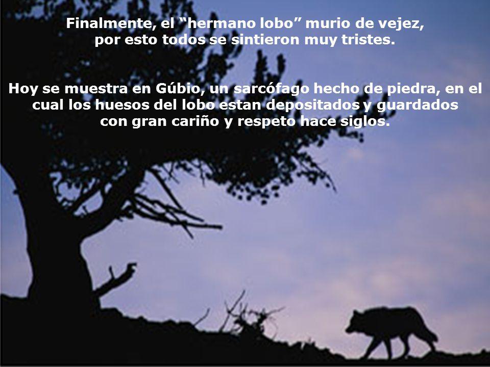 Con la promesa de nunca mas lastimar ni a los hombres ni a los animales, el lobo se fue con Francisco hasta la ciudad. También el pueblo de la ciudad