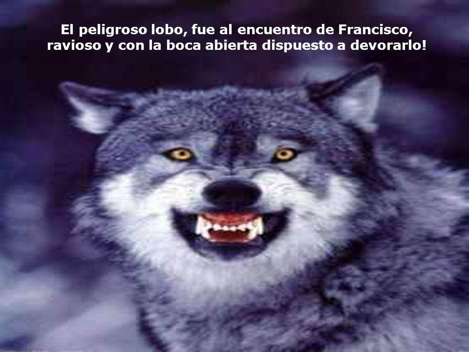 Francisco se ofrecio a ayudarlos. Resolvio salir al encuentro del lobo, solito y desarmado, pero lleno de simpatia y benevolencia por el animal, y com