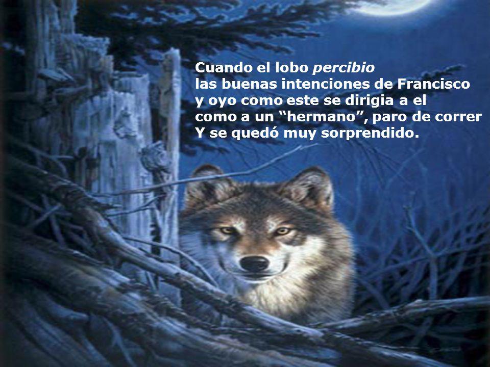 El peligroso lobo, fue al encuentro de Francisco, ravioso y con la boca abierta dispuesto a devorarlo!