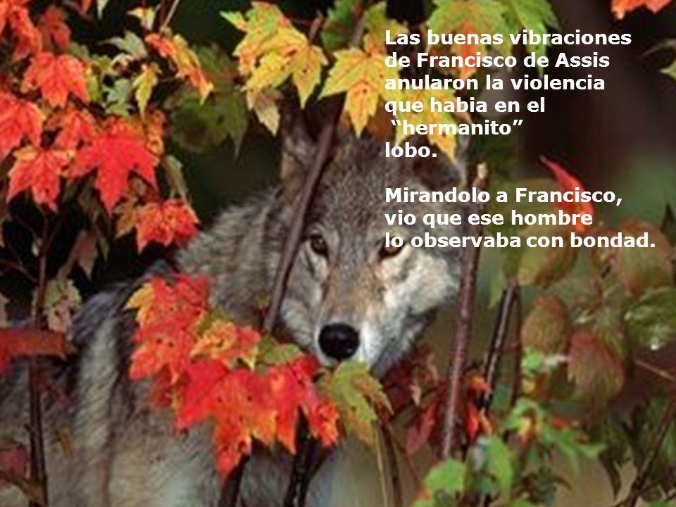 Cuando el lobo percibio las buenas intenciones de Francisco y oyo como este se dirigia a el como a un hermano, paro de correr Y se quedó muy sorprendi
