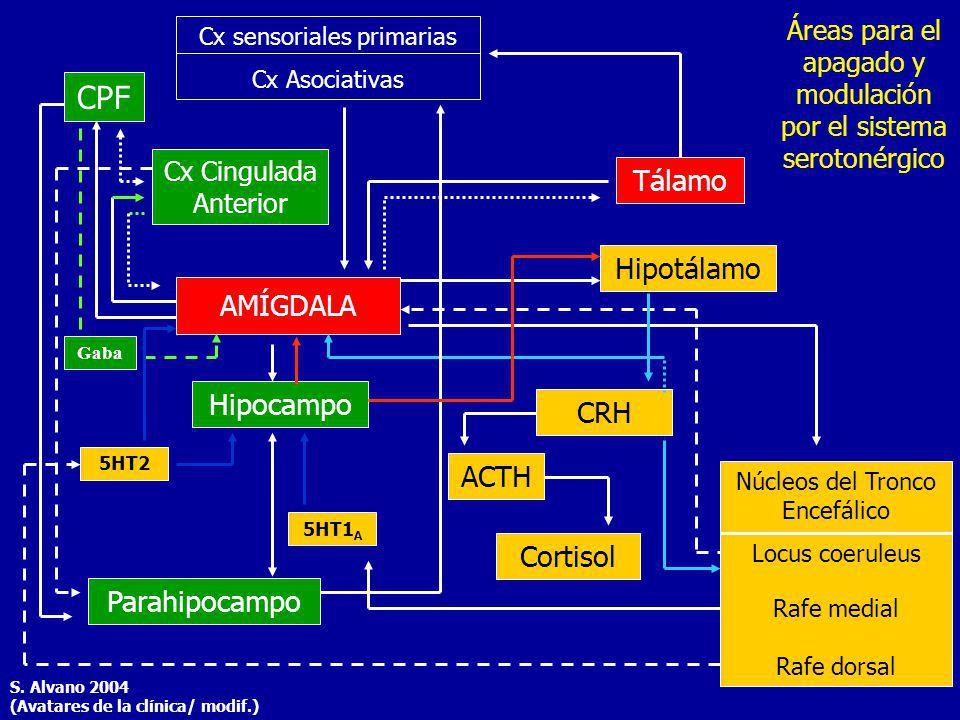 Cx sensoriales primarias Cx Asociativas CPF AMÍGDALA Tálamo Hipotálamo Cx Cingulada Anterior Hipocampo CRH ACTH Cortisol Núcleos del Tronco Encefálico