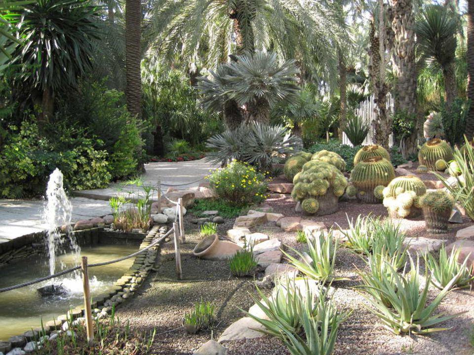 Rocalla, área que cuenta con una extensa y bien clasificada colección de cactus y plantas crasas, propias de regiones áridas y desérticas, bellamente