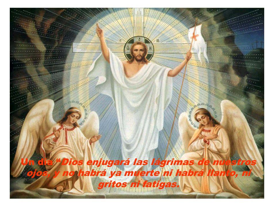 Seguir al crucificado hasta compartir con Él la resurrección es, en definitiva, aprender adar la vida, el tiempo y tal vez nuestra salud por amor.