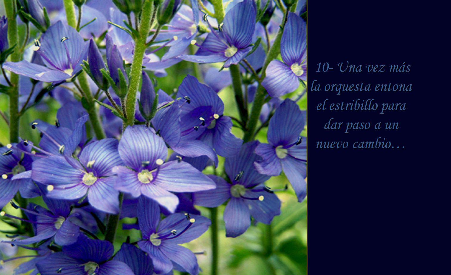 9- Es el momento de apreciar de apreciar tanta belleza y de contemplar las flores color cielo.