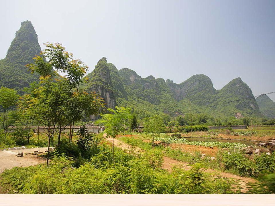 Paisajes de cultivo de Giulin En la zona de Guilin y Yangshuo muestra paisajes verdes con multitudes de plantaciones activa con campesinos trabajando.