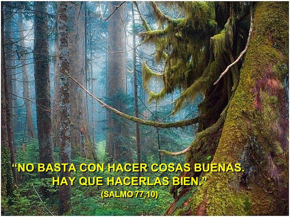NO BASTA CON HACER COSAS BUENAS. HAY QUE HACERLAS BIEN. (SALMO 77,10)