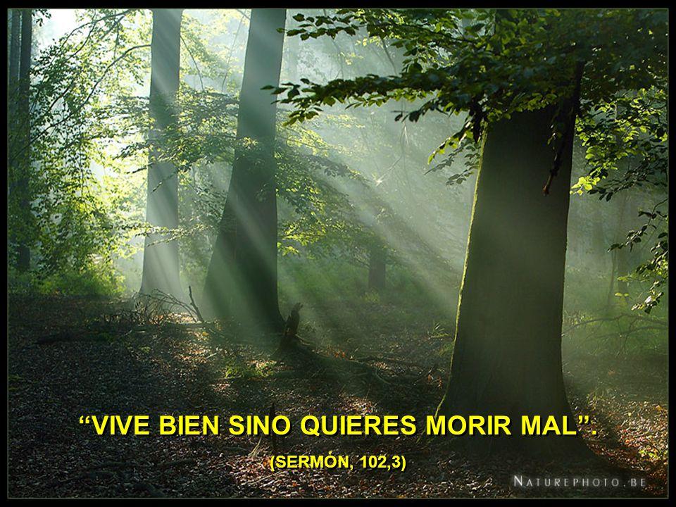 VIVE BIEN SINO QUIERES MORIR MAL. (SERMÓN, 102,3)