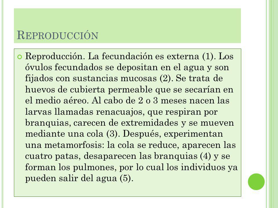 R EPRODUCCIÓN Reproducción.La fecundación es externa (1).