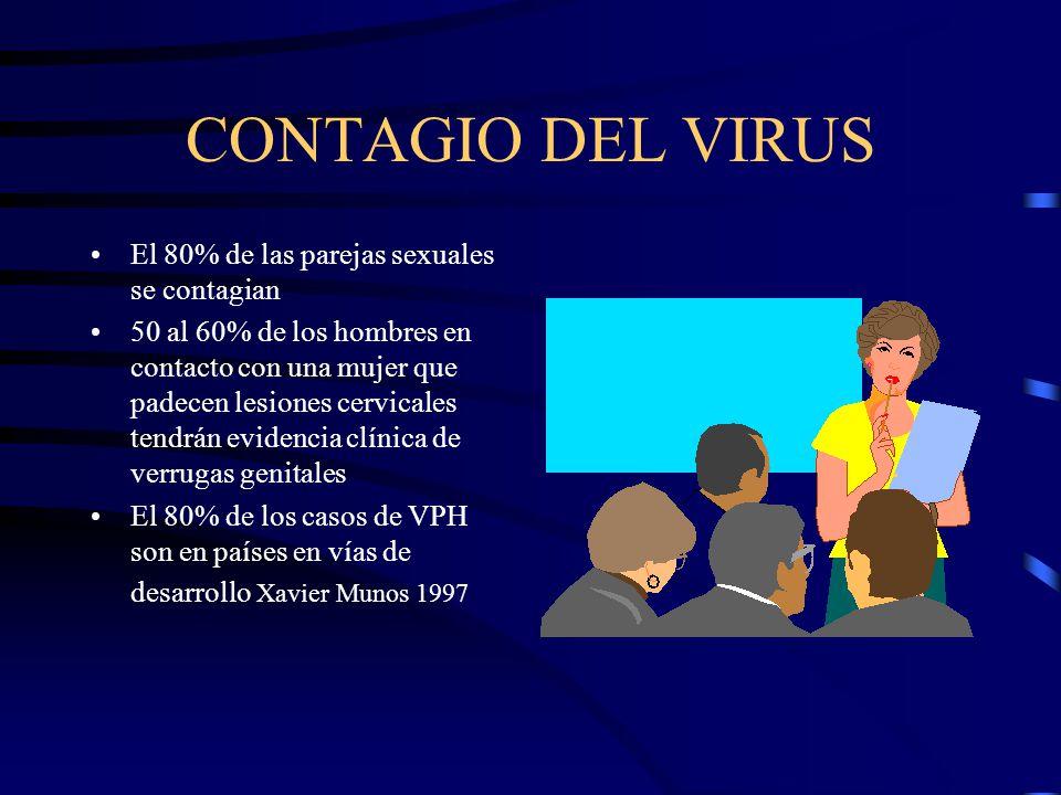 CONTAGIO DEL VIRUS El 80% de las parejas sexuales se contagian 50 al 60% de los hombres en contacto con una mujer que padecen lesiones cervicales tend