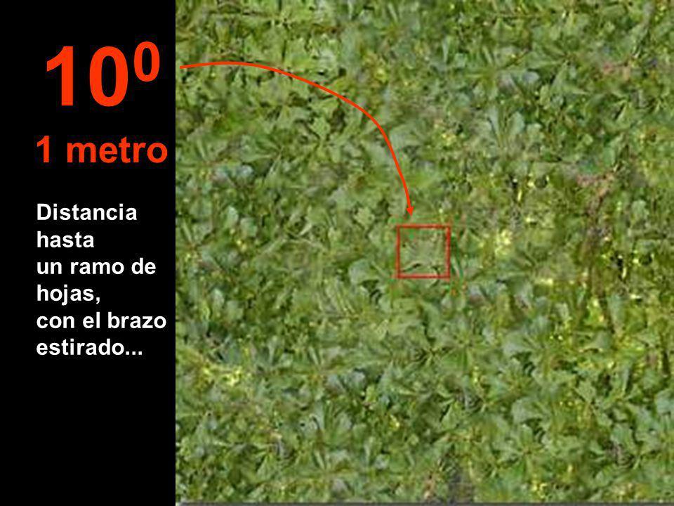 Distancia hasta un ramo de hojas, con el brazo estirado... 10 0 1 metro