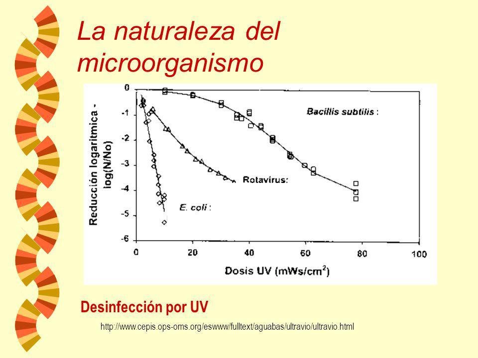 La presencia de materia orgánica extraña reduce notablemente la eficacia de los agentes antimicrobianos : La presencia de materia orgánica extraña red