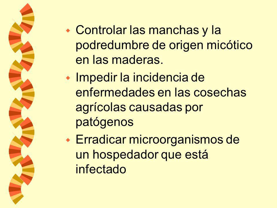 w Controlar las manchas y la podredumbre de origen micótico en las maderas.
