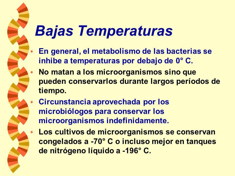 Incineración: w La destrucción de los microorganismos por combustión o cremación. w En los laboratorios, las asas de siembra se calientan a la llama d